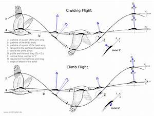 Bird Diagram Flight
