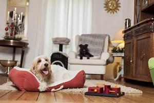 Das Futterhaus Online Shop : tiermagazin stressfrei mit tieren durch die weihnachtszeit tolle rezepte f r hundekuchen zum ~ Eleganceandgraceweddings.com Haus und Dekorationen