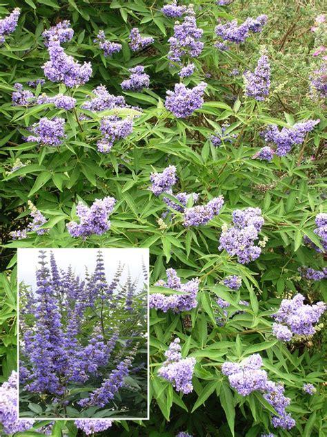 summer flowering plants summer flowering shrubs hgtv