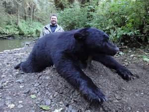 Biggest Black Bear Alaska