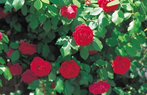 flowers  plant   cemetery hunker