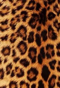 Best 25+ Cheetah print wallpaper ideas on Pinterest ...