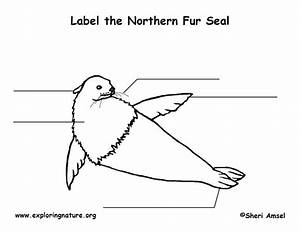 Seal  Fur  Labeling Page
