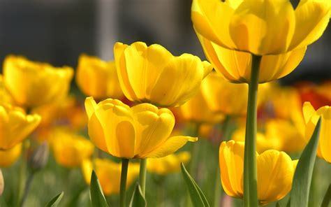 Petal Yellow Flower - Photography Wallpapers on Inspirationde