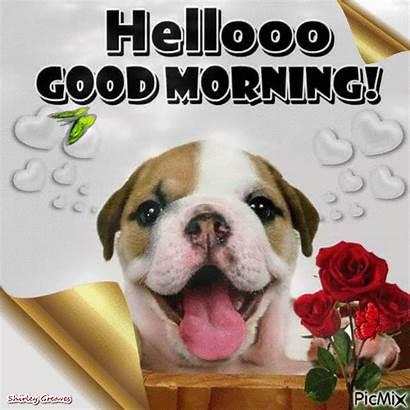 Morning Dog Hello Hellooo Gifs Animated Happy