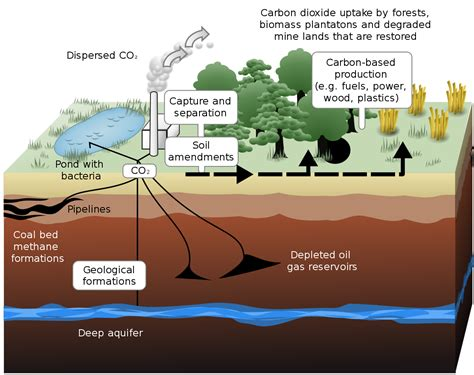 carbon sequestration wikipedia
