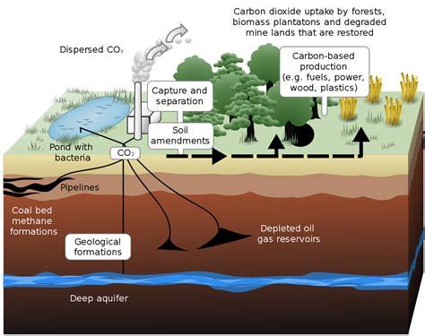 define the term carbon sink carbon sequestration