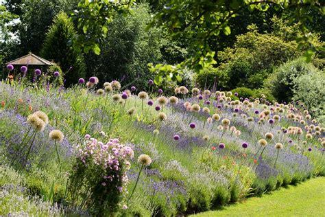 Lavendel Und Gräser by Lavendel Kombinieren Zierlauch Gartentechnik De