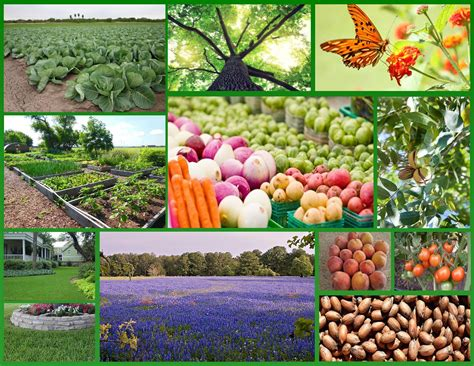 what is horticultural horticulture williamson