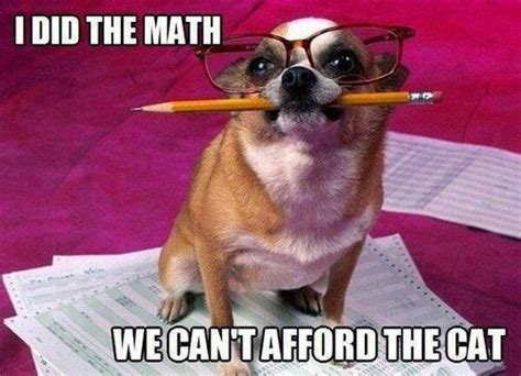 Accountant Dog Meme - dog accountant pictures photos and images for facebook tumblr pinterest and twitter
