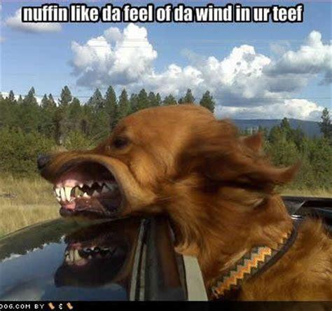 funny pics dogs teeth   dentist