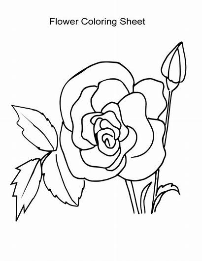 Coloring Rose Flower Sheets Sheet Boys Pages