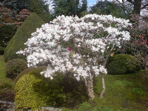 planter un magnolia fiches conseils