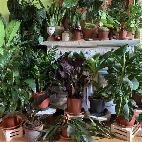 Le piante pendenti da interno sono molto decorative. Piante Da Interno Pendenti - Le piante da interno: 2 ...