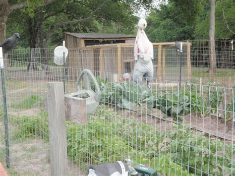 how to keep chickens out of garden how do you keep chickens out of a flower garden