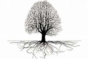 Linde Baum Steckbrief : holzarten linde proholz austria ~ Orissabook.com Haus und Dekorationen