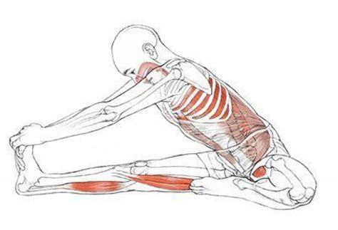 • how to build a balanced vinyasa to improve lesson results. 16 best Yoga Anatomy images on Pinterest | Yoga anatomy, Yoga poses and Asana