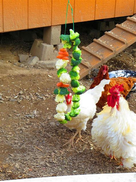 1000 ideas about chicken pictures on bantam