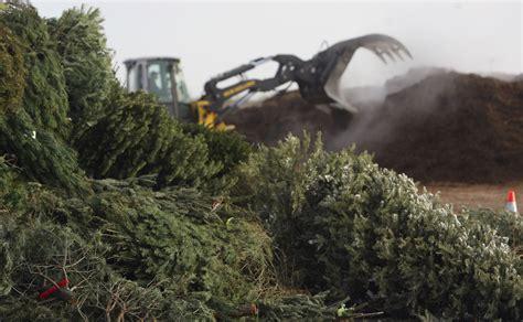 christmas tree cutting ranch near san antonio city to open tree recycling drop locations san antonio express news