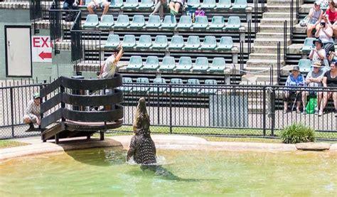 australia queensland zoo things amazing