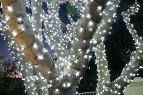 how to do christmas lights on trees how to wrap trees with outdoor lights