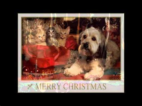 merry christmas cats dogs youtube