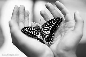 Black And White Butterfly Pictures, Photos, and Images for ...