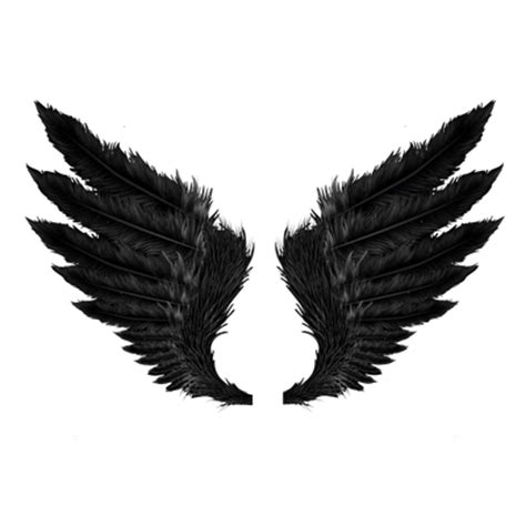 wings transparent png images stickpng