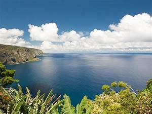 Exotic Orchard On Ocean Cliff! Waterfall/ Ocean View Takes ...
