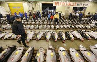 large kitchen island for sale new documentary on tsukiji fish market captures essence of