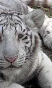 Dakota Zoo - Animals