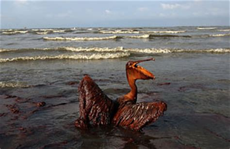 the bp spill the top 10 everything of 2010 time