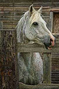 1246 best Horse art and photography images on Pinterest ...
