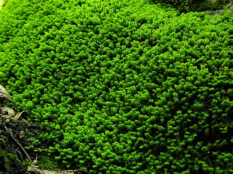 moss in vegetable garden pin by wup wup w on habitat final major project pinterest