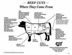 Poultry  Cow And Pigs On Pinterest