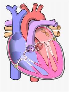 Clip Art File Diagram Of The