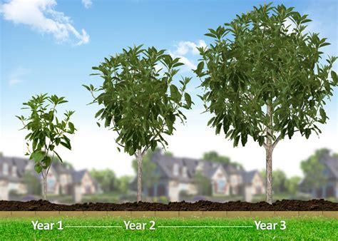 fast growing growing tree 28 images growing tree stock animation 737723 seed growing tree animation