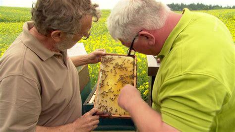 Darf Bienen Im Wohngebiet Halten by Neue Regeln F 252 R Bienenhaltung Als Erfolg Ooe Orf At