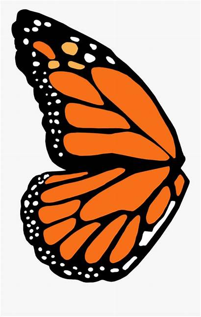 Butterfly Wing Template Monarch Clipart Transparent Clipartkey