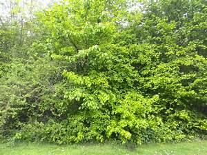 Immergrüne Sträucher Und Bäume : foto b ume und str ucher am steverufer klaus ahrens ~ Michelbontemps.com Haus und Dekorationen