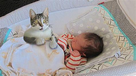 cat meeting newborn baby  time curious cat