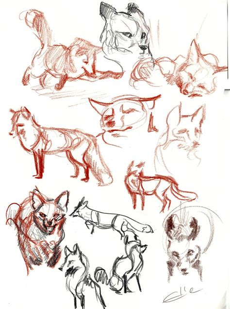 draw foxes images  pinterest drawing