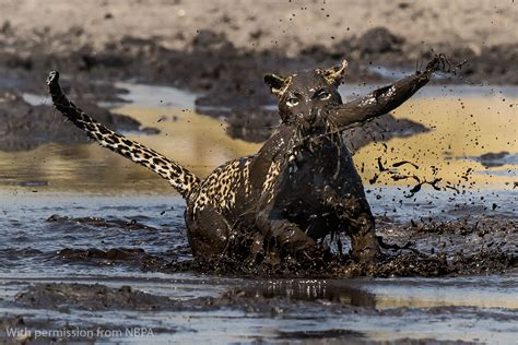 Nature's Best Photography Africa 2016 Winners Gallery