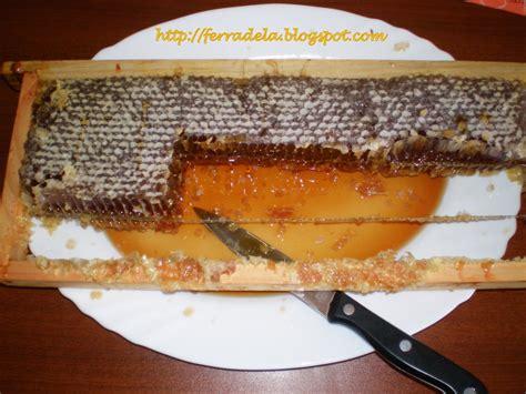 Devorar um favo de mel fresquinho é bom demais Fórum