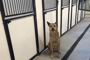 international animal lounge yyc calgary airport pet With boarding my dog