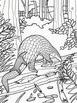 Coloring Pangolin Animal Biology Printable Microscope Wild Colouring Drawing Sheets Adult Wildlife Earmuffs Chesters Fund Designlooter Drawings Trueinfo sketch template