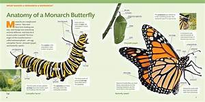 How To Raise Monarch Butterflies Book - Step By Step Guide