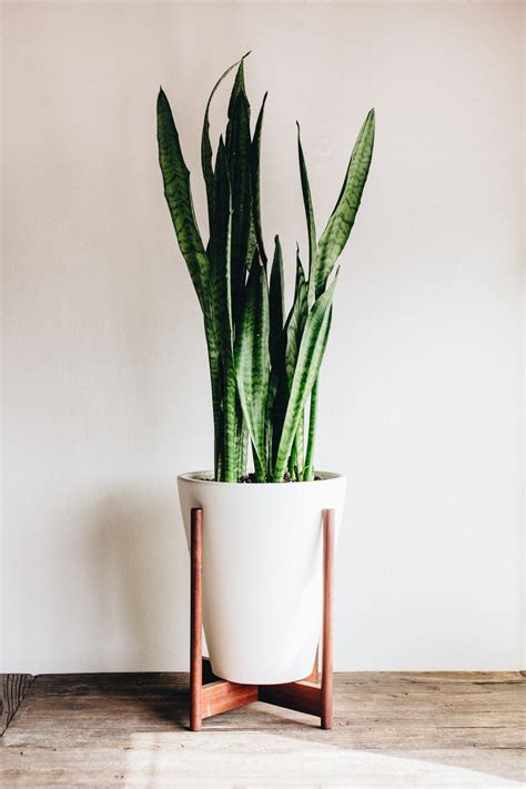 Floor Standing Planters by Adding Green To Your Home Take Aim