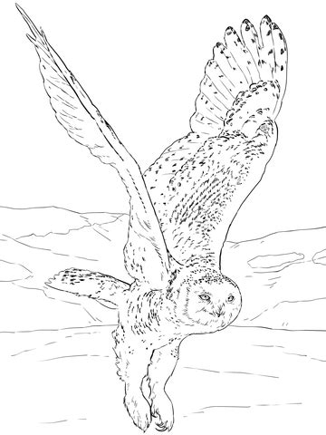snowy owl coloring page supercoloringcom
