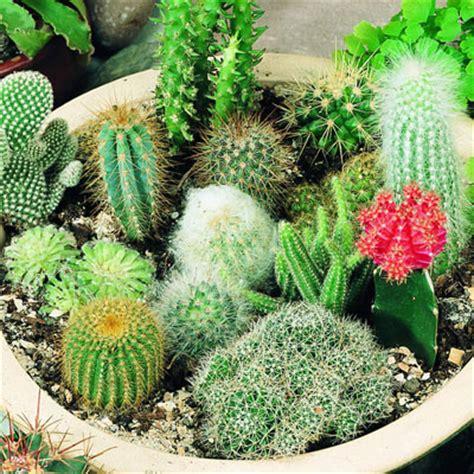cactus varieties photos mixed varieties cactus perennial seeds cactus spp